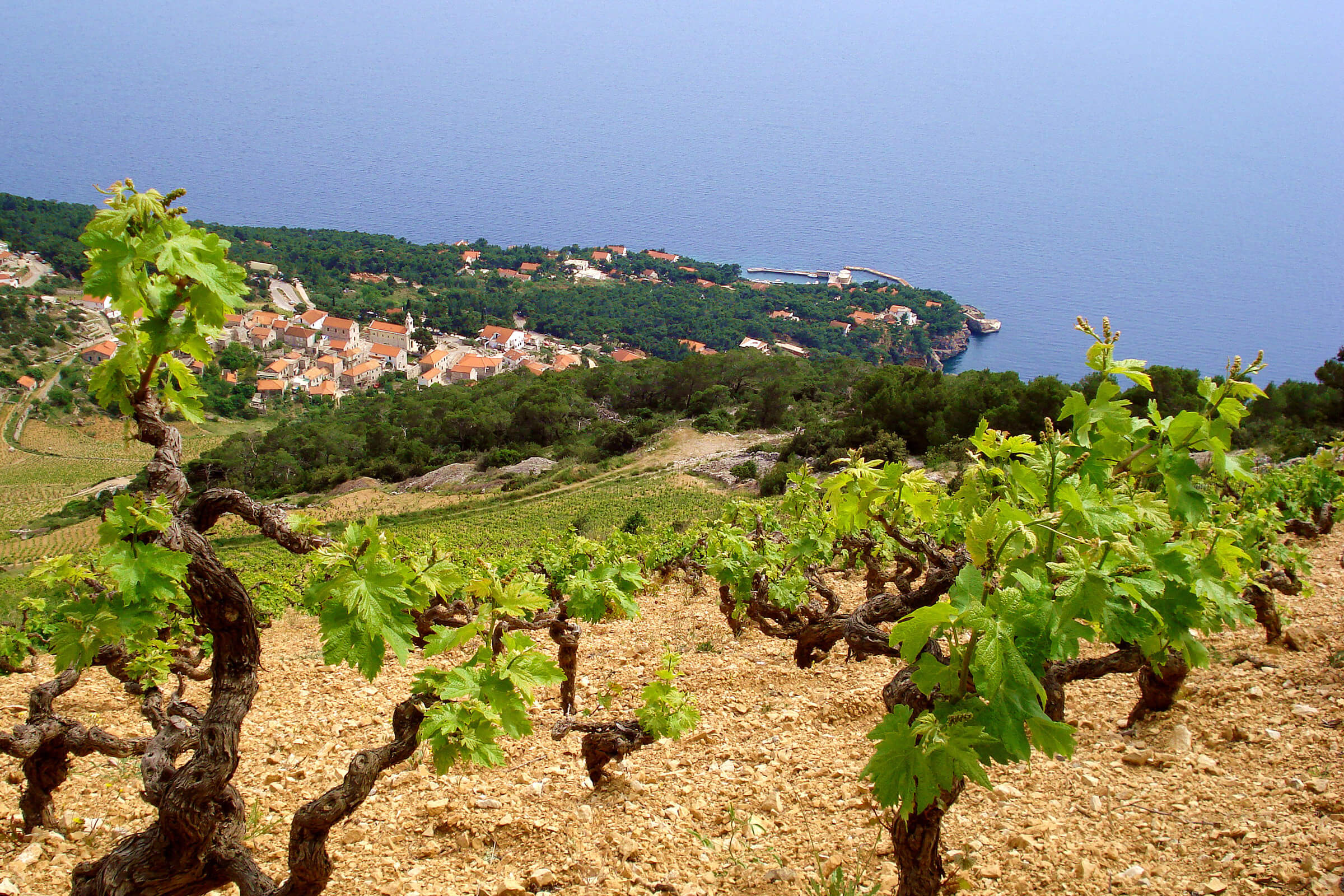 Hvar wineries